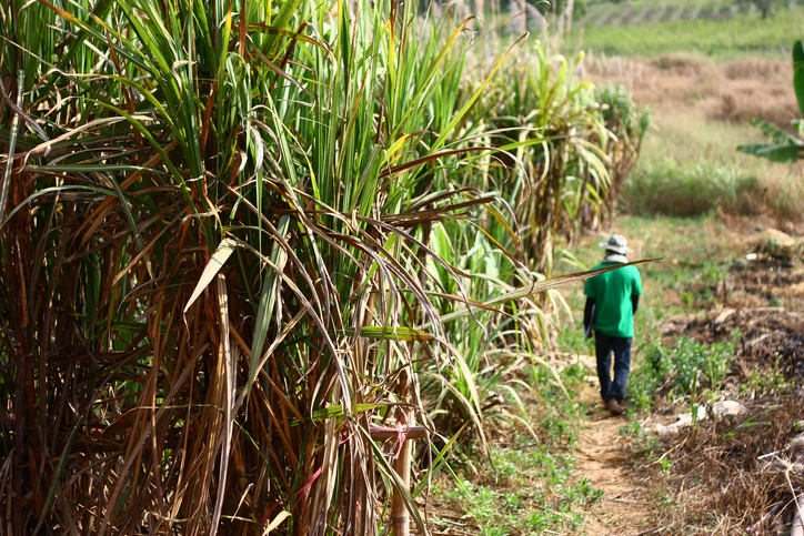 Uganda Farm and Family Balance Study