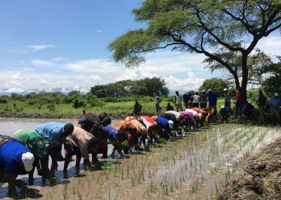An Empirical Analysis on Expanding Rice Production in Sub-Saharan Africa
